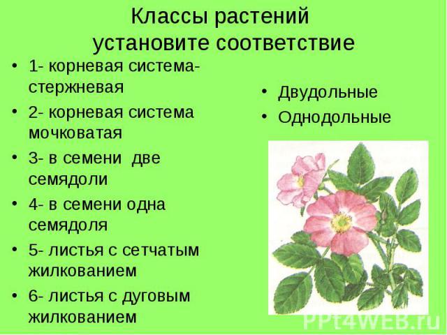 Классы растений установите соответствие1- корневая система- стержневая2- корневая система мочковатая3- в семени две семядоли4- в семени одна семядоля5- листья с сетчатым жилкованием6- листья с дуговым жилкованиемДвудольныеОднодольные