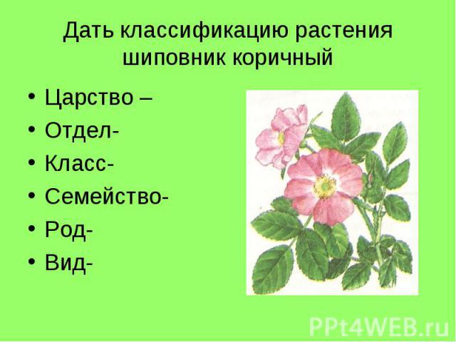 Дать классификацию растения шиповник коричныйЦарство –Отдел- Класс-Семейство- Род-Вид-