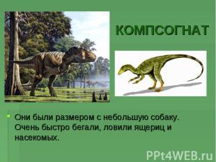 КОМПСОГНАТОни были размером с небольшую собаку. Очень быстро бегали, ловили ящер