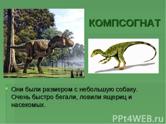 КОМПСОГНАТОни были размером с небольшую собаку. Очень быстро бегали, ловили ящериц и насекомых.