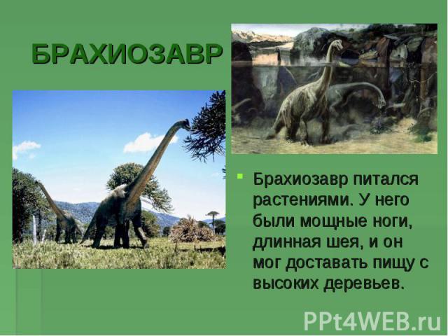 БРАХИОЗАВРБрахиозавр питался растениями. У него были мощные ноги, длинная шея, и он мог доставать пищу с высоких деревьев.
