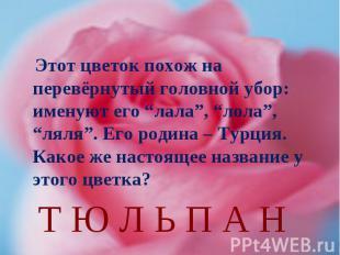 """Этот цветок похож на перевёрнутый головной убор: именуют его """"лала"""", """"лола"""", """"ля"""