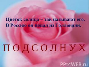 Цветок солнца – так называют его. В Россию он попал из Голландии.П О Д С О Л Н У
