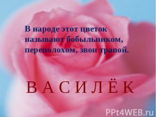 В народе этот цветок называют бобыльником, переполохом, звон травой.В А С И Л Ё