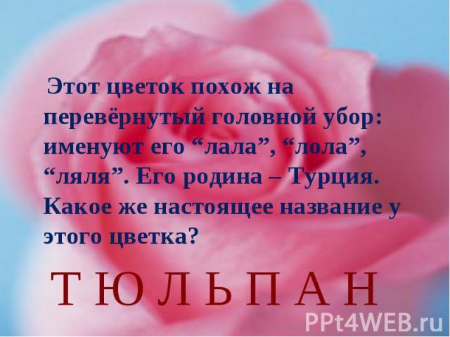 """Этот цветок похож на перевёрнутый головной убор: именуют его """"лала"""", """"лола"""", """"ляля"""". Его родина – Турция. Какое же настоящее название у этого цветка?Т Ю Л Ь П А Н"""