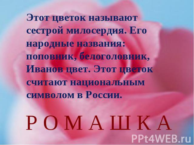 Этот цветок называют сестрой милосердия. Его народные названия: поповник, белоголовник, Иванов цвет. Этот цветок считают национальным символом в России.Р О М А Ш К А