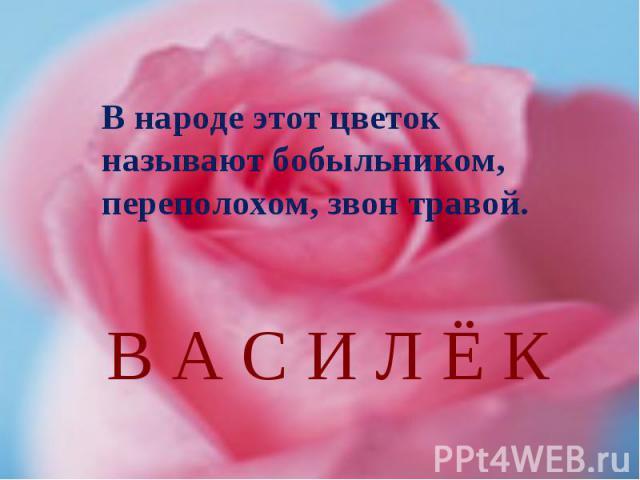 В народе этот цветок называют бобыльником, переполохом, звон травой.В А С И Л Ё К