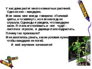 У нас дома растет много комнатных растений. Одно из них – мандарин. Моя мама мне