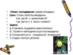 Объект исследования: Дерево Мандарин.Цель: Узнать свойства мандарина. Как растёт