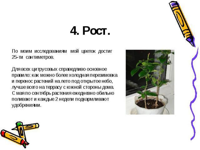 4. Рост.По моим исследованиям мой цветок достиг 25-ти сантиметров. Для всех цитрусовых справедливо основное правило: как можно более холодная перезимовка и перенос растений на лето под открытое небо, лучше всего на террасу с южной стороны дома. С ма…
