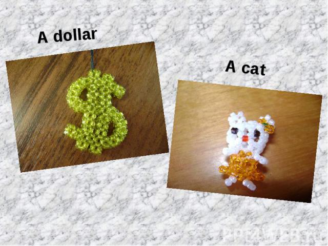 A dollarA cat