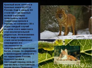 Красный волк занесен в Красные книги МСОП и России. Еще в начале ХХ столетия ста