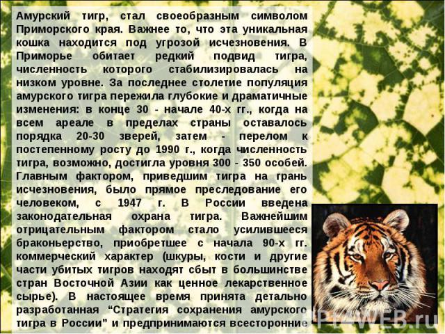 Амурский тигр, стал своеобразным символом Приморского края. Важнее то, что эта уникальная кошка находится под угрозой исчезновения. В Приморье обитает редкий подвид тигра, численность которого стабилизировалась на низком уровне. За последнее столети…