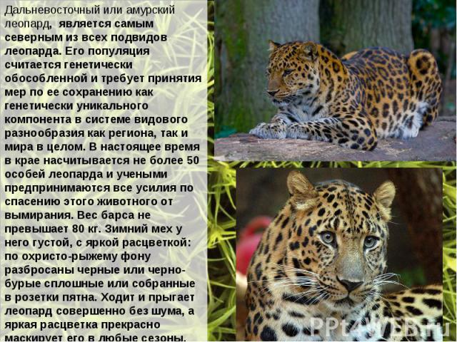 Дальневосточный или амурский леопард, является самым северным из всех подвидов леопарда. Его популяция считается генетически обособленной и требует принятия мер по ее сохранению как генетически уникального компонента в системе видового разнообразия …