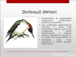 Зеленый дятел.Встречается на территории Аткарского, Петровского, Хвалынского рай