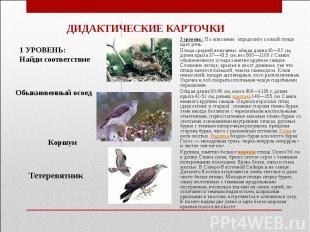 ДИДАКТИЧЕСКИЕ КАРТОЧКИ2 уровень: По описанию определите о какой птице идет речь: