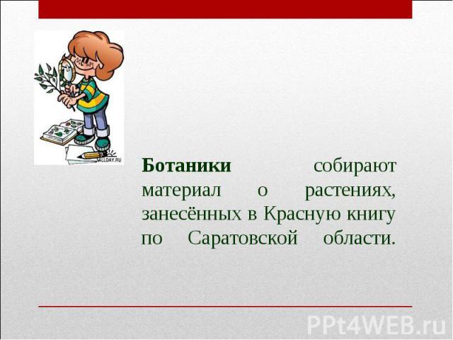 Ботаники собирают материал о растениях, занесённых в Красную книгу по Саратовской области.