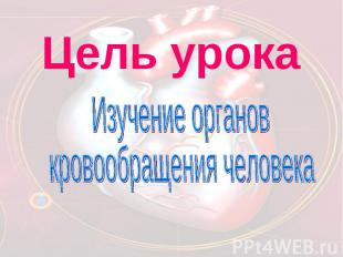 Цель урока Изучение органов кровообращения человека