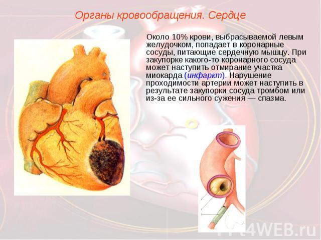 Органы кровообращения. СердцеОколо 10% крови, выбрасываемой левым желудочком, попадает в коронарные сосуды, питающие сердечную мышцу. При закупорке какого-то коронарного сосуда может наступить отмирание участка миокарда (инфаркт). Нарушение проходим…