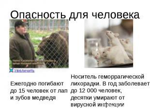 Опасность для человекаЕжегодно погибаютдо 15 человек от лапи зубов медведяНосите
