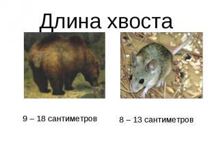 Длина хвоста9 – 18 сантиметров8 – 13 сантиметров