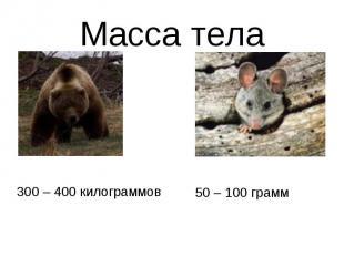 Масса тела300 – 400 килограммов50 – 100 грамм