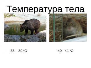Температура тела38 – 39 оС40 - 41 оС