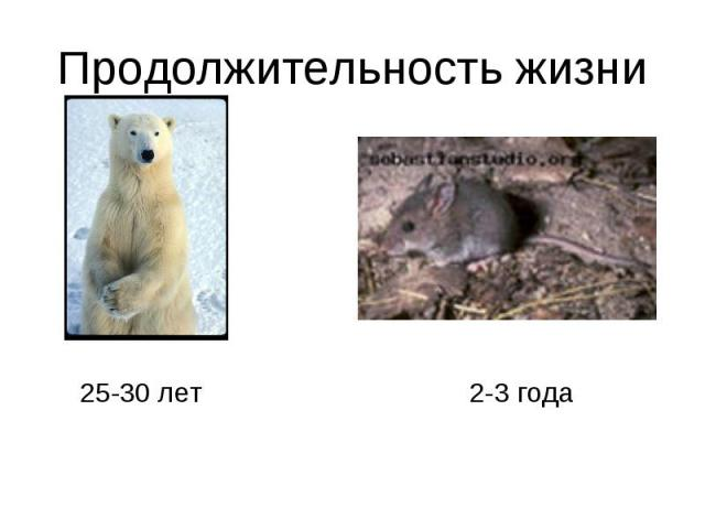 Продолжительность жизни25-30 лет2-3 года