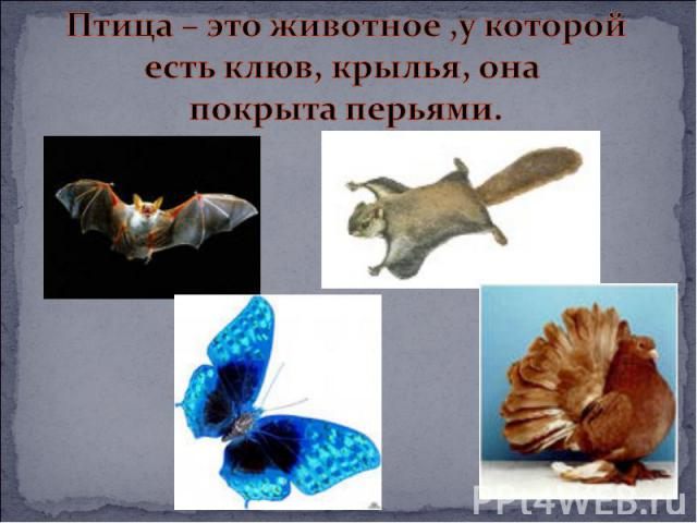 Птица – это животное ,у которойесть клюв, крылья, она покрыта перьями.