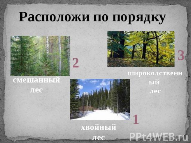 Расположи по порядкусмешанный лесхвойный лесшироколственный лес