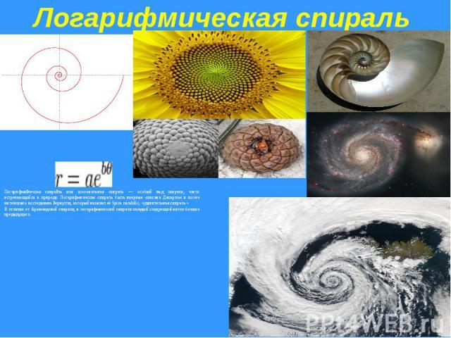 Логарифмическая спиральЛогарифмическая спираль или изогональная спираль — особый вид спирали, часто встречающийся в природе. Логарифмическая спираль была впервые описана Декартом и позже интенсивно исследована Бернулли, который называл её Spira mira…