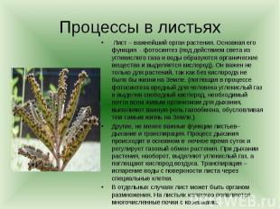 Процессы в листьях Лист – важнейший орган растения. Основная его функция - фотос