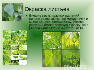 Окраска листьевВнешне листья разных растений сильно различаются, но между ними и