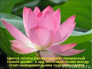 Цветок лотоса распространяет прекрасный тонкий аромат, и над лотосным полем всег