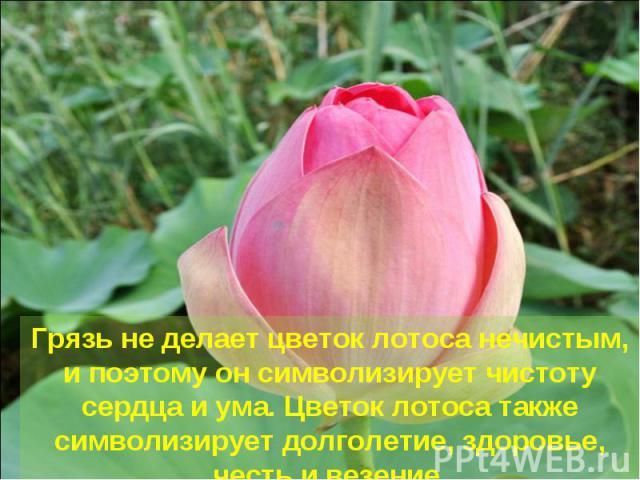 Грязь не делает цветок лотоса нечистым, и поэтому он символизирует чистоту сердца и ума. Цветок лотоса также символизирует долголетие, здоровье, честь и везение.