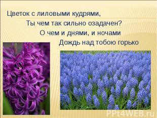 Цветок с лиловыми кудрями, Ты чем так сильно озадачен? О чем и днями, и ночами Д