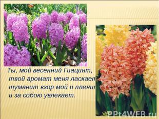 Ты, мой весенний Гиацинт, твой аромат меня ласкает, туманит взор мой и пленит, и