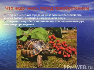 Что надо знать перед приобретением Водные черепахи страдают из-за глазных болезн