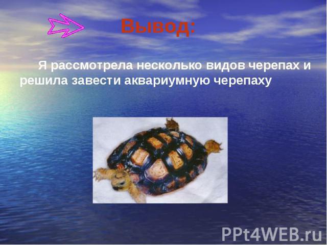 Вывод: Я рассмотрела несколько видов черепах и решила завести аквариумную черепаху