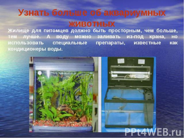 Узнать больше об аквариумных животныхЖилище для питомцев должно быть просторным, чем больше, тем лучше. А воду можно заливать из-под крана, но использовать специальные препараты, известные как кондиционеры воды.