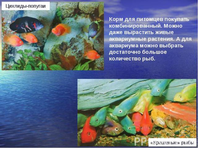 Корм для питомцев покупать комбинированный. Можно даже вырастить живые аквариумные растения. А для аквариума можно выбрать достаточно большое количество рыб.