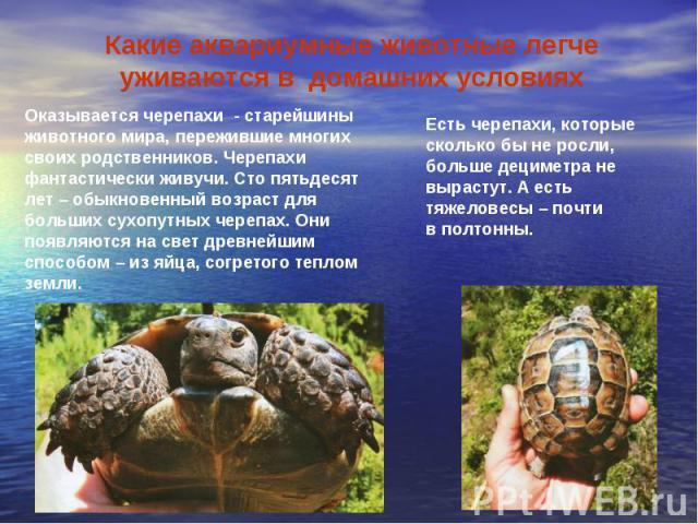 Какие аквариумные животные легче уживаются в домашних условияхОказывается черепахи - старейшины животного мира, пережившие многих своих родственников. Черепахи фантастически живучи. Сто пятьдесят лет – обыкновенный возраст для больших сухопутных чер…