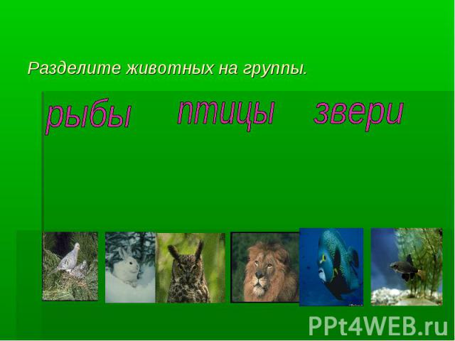 Разделите животных на группы.