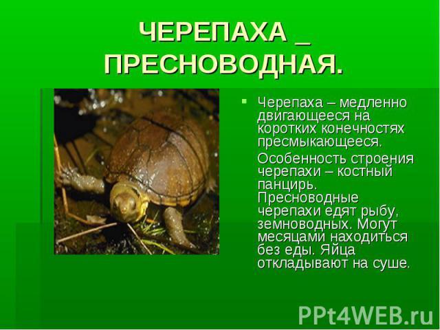ЧЕРЕПАХА _ ПРЕСНОВОДНАЯ.Черепаха – медленно двигающееся на коротких конечностях пресмыкающееся. Особенность строения черепахи – костный панцирь. Пресноводные черепахи едят рыбу, земноводных. Могут месяцами находиться без еды. Яйца откладывают на суше.