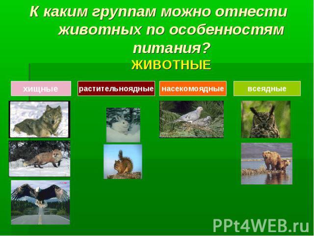 К каким группам можно отнести животных по особенностям питания?ЖИВОТНЫЕ