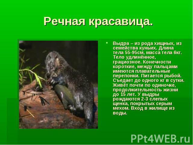 Речная красавица.Выдра – из рода хищных, из семейства куньих. Длина тела 55-95см, масса тела 6кг. Тело удлинённое, грациозное. Конечности короткие, между пальцами имеются плавательные перепонки. Питается рыбой. Съедает до одного кг в сутки. Живёт по…