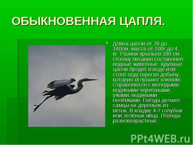 ОБЫКНОВЕННАЯ ЦАПЛЯ.Длина цапли от 28 до 140см, масса от 100г до 4 кг. Размах крыльев 180 см. Основу питания составляют водные животные .Крупные цапли бродят в воде или стоят подстерегая добычу, которую оглушают клювом. Справляются с молодыми водяным…