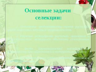 Основные задачи селекции:1. Повышение продуктивности сортов растений, пород живо