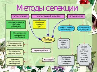 Методы селекции