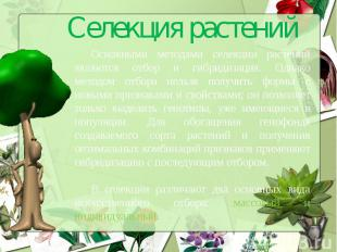 Селекция растенийОсновными методами селекции растений являются отбор и гибридиза